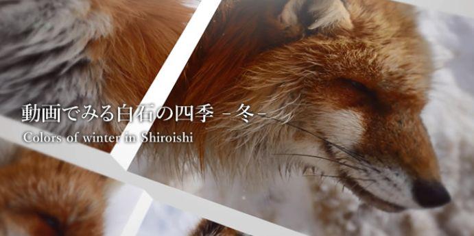 動画でみる白石の四季 -冬-