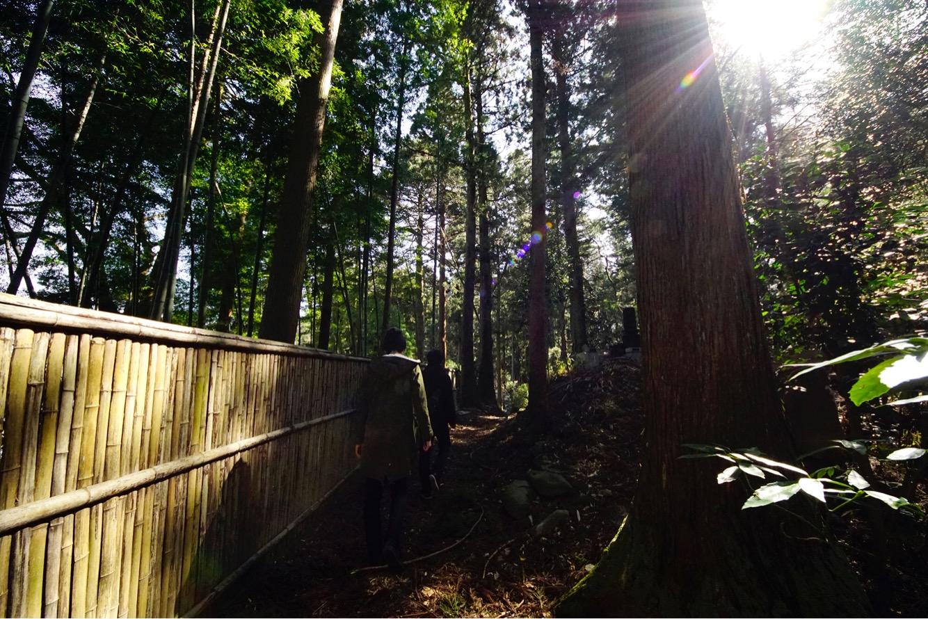 木漏れ日揺れる杉林